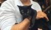 Eduardo Moscovis, o gato-guardião da novela das nove